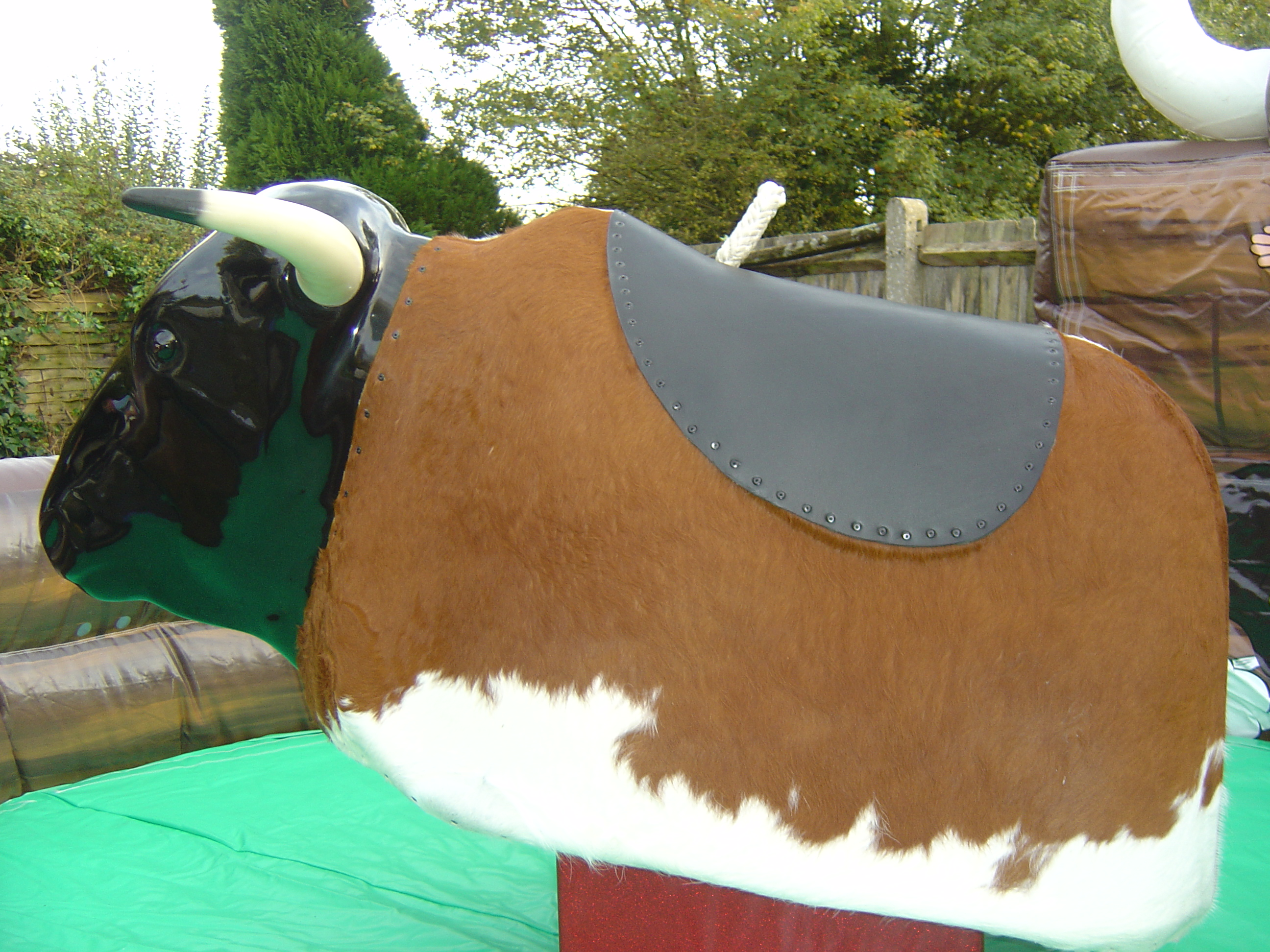 rodeo bull hire wiltshire